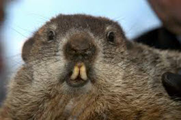 Characteristic of Groundhogs