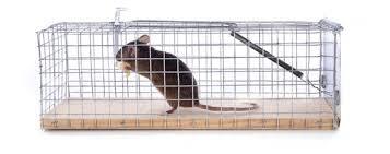 Havahart humane mouse trap