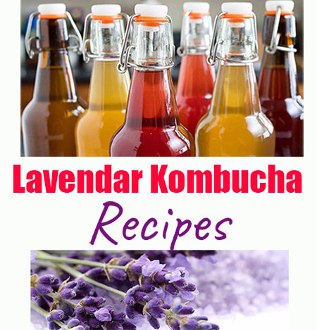 Lavendar Kombucha Recipes