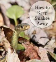 Prevent snakes
