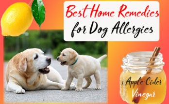 Best Home remedies for Dog allergies