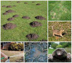 Ways to recognise groundhog harms