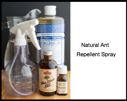 ant repellant spray