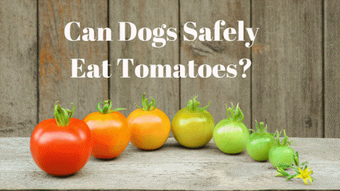 are tomatoes safe