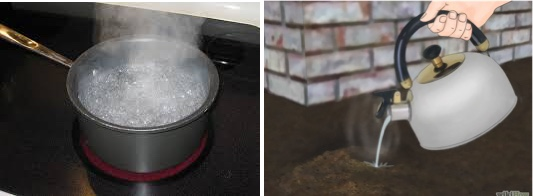 boiling and soapy water