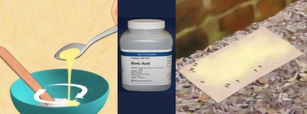 boric acid ant killer