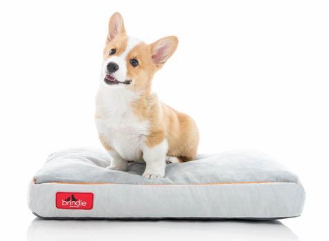 brindle dog beds