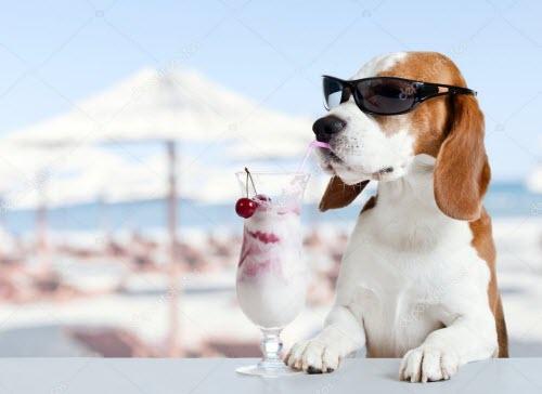 cute dog yogurt