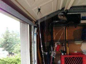 spider in garage