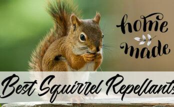 Best squirrel repellants
