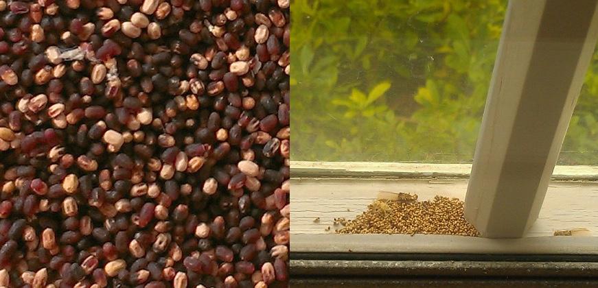 termite pellet closeup